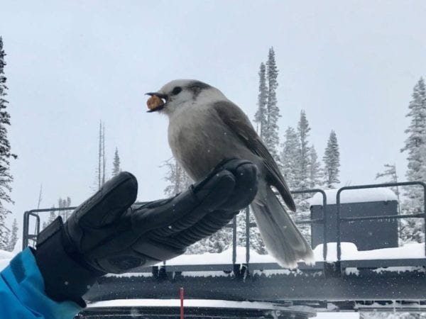 Even the Birds Love the Hestra Leather Fall Line 3-Finger Glove