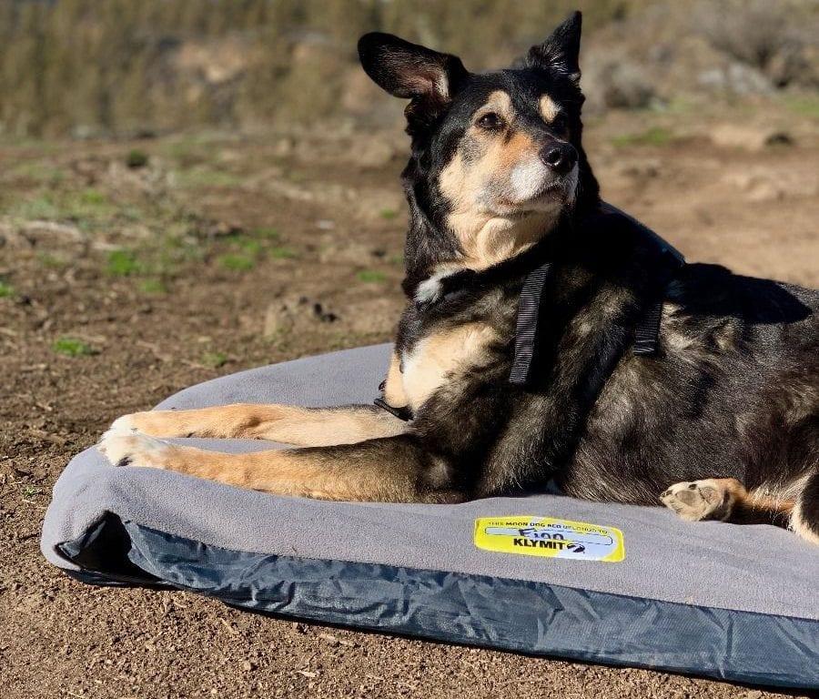 Klymit Moon Dog Bed